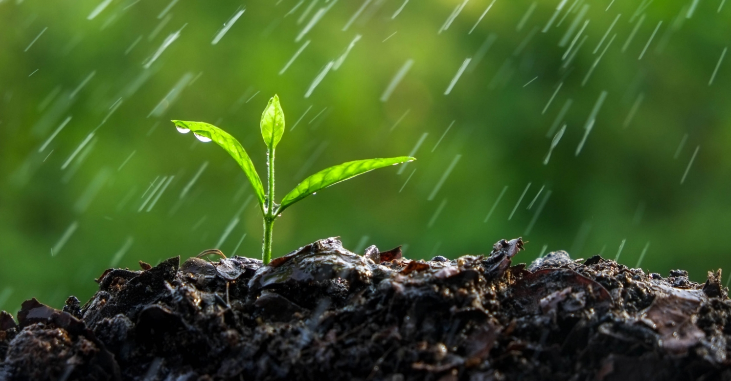 Rain falling on a small plant in the soil