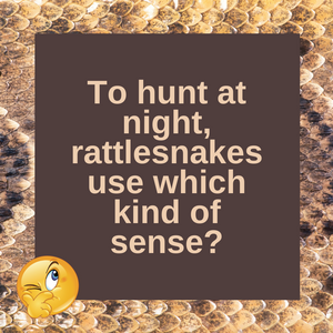 How Rattlesnakes See at Night