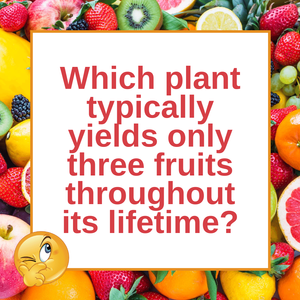 Question of the Day | The Pineapple Plant